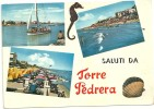 TORRE PEDRERA  .-- CAVALLUCCIO MARINO  ANNI  60 - Rimini