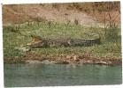 CROCODILE  --EST AFRICA GAME  --- VIAGGIATA--X VIGANELLO TICINO  CH--  --    ANNI  70 - Tanzania