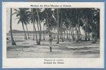OCEANIE - Archipel Des SAMOA -- Plantation De Cocotier - Samoa
