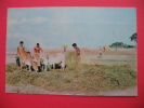 Paddy Threshing By Cows - Bangladesh