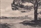 Cp , 40 , CAPBRETON , A Travers Les Pins - Capbreton