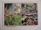 Postcard Postal Kingdom Of Tonga Feasts - Tonga