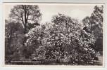 Richmond Terrace Gardens (pk25187) - Surrey