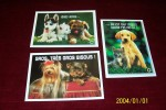 LOT DE 3 CARTES   °   Theme Chiens - Dogs