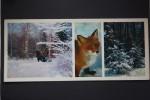 Fox. Old Postcard 1979 - Animaux & Faune