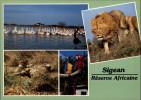 11 - SIGEAN - Réserve Africaine - - Sigean