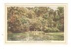 CPA BUITENZORG VIJVER IN DEN BOTANICHEN TUIN TE BUITENZORG Jardin Botanique - Indonésie