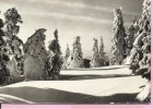 Happy New Year - Nature Covered With Snow, Zagreb, 1963., Yugoslavia (RA 1709, Photo: I. Medar) - Anno Nuovo
