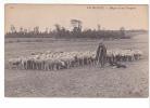 24923 EN BEAUCE France -  Berger Son Troupeau N° 293 ND Chien Mouton  Sheep Mutton - Elevage