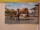 Cart. -  Asia -  Aden -Camel Cart. - Cartoline