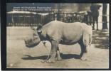 RHINOCEROS RHINO NASHORN ZOO BERLIN OLD POSTCARD #07 - Rhinocéros