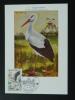 Carte Maximum Card Monaco 1962 Cigogne Stork Ref 56558 - Storchenvögel