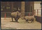 RHINOCEROS RHINO NASHORN ZOO ZAGREB CROATIA OLD POSTCARD #19 - Rinoceronte