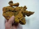 EPONGE VERITABLE MER IONIENNE ( Voir 2 Photos Et Descriptif ) - Minéraux & Fossiles
