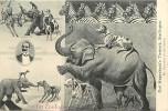 Ref  K197- Carte Allemande -allemagne - Carl Hagenbeck S Tierpark -stellingen -animaux -zoo-zoos  - Carte Bon Etat  - - Allemagne
