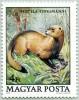 N° Yvert 2694 - Timbre De Hongrie (1979) - MNH - Putois (JS)