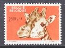 BELGIUM   B 693  *   ZOO   GIRAFFE - Belgium
