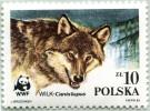 N° Yvert 2788 - Timbre De Pologne (1985) - MNH - WWF - Le Loup (Gros Plan Tête) (JS) - 1944-.... Republic