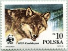 N° Yvert 2788 - Timbre De Pologne (1985) - MNH - WWF - Le Loup (Gros Plan Tête) (JS) - 1944-.... República