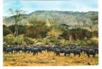 Tanzania - Buffalo Herd And Egrets In Manyara Game Park - Nice Fish Stamp - Tansania