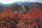 China - Beautiful View Of Deep-dyed Serried Woods, Badaling Great Wall, Beijing - Chine