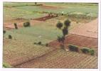 15237. Postal QUEZALTENANJO (Guatemala). Cooperativa Santa Ana ZUNIL - Guatemala