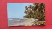 > Costa Rica - Beach Of Uvita Island  Back Side Left Border Paper Loss Ref 2024 - Costa Rica
