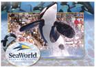 (666) USA Seaworld Orca - Fische Und Schaltiere