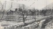 GUERRE 1914 - 1915 -  Le Cimetière Des Alpins à MOOSCH - Vallée à THANN - CCC - - Oorlog 1914-18