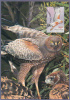 Australia 2015 Spott Harrier Bird Maximum Card Posted To Italy - Maximum Cards