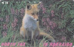 Télécarte Japon - Animal - RENARD  - HOKKAIDO FOX Japan Phonecard  - FUCHS Telefonkarte - VOS - 97 - Japan