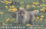 Télécarte Japon / 430-9538 - Animal - RENARD -  FOX Japan Phonecard / 105 U  - FUCHS Telefonkarte - VOS - 100 - Japan