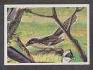 AMERICANA MUNCHEN VIGNETTE ADHÉSIVE AUTO COLLANT N° 171 COUCOU JACOBIN - 2 Scans - - Stickers