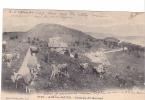 24993 Aix Les Bains -plateau Revard -8168 Giletta -vache Cloche Elevage