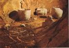 15291. Postal LA COCALIERE, Grotte SAint Ambroise (Gard) Prehistorique - Historia