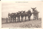 LE MONT DORE - Au Sommet Du Sancy - Les Anes Au Repos - Le Mont Dore
