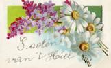 Postkaart / Post Card / Flowers / Bloemen / Fleurs / Groeten Van 't Koiel (?) / Hoicl (?) / Hoiel (?) / 1906 - Souvenir De...