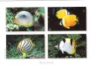 Maldiven - Maldives - Fish - Fisch - Butterflyfish - Underwater -  Nice Stamp - Maldiven