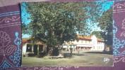 CPM - BISCAROSSE - La Place De L'Eglise Et Le Vieil Orme -   Hotel Du Commerce Café Restaurant - Biscarrosse