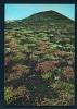 ICELAND  -  Bjorsardalur Valley Vegetation  Unused Postcard As Scan - Iceland