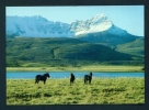 ICELAND  -  Skorradalur  Unused Postcard As Scan - Islande