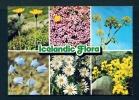 ICELAND  -  Icelandic Flora  Unused Postcard As Scan - Islanda