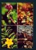 ICELAND  -  Icelandic Flora  Unused Postcard As Scan - Iceland