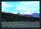 ICELAND  -  Oraefajokull  Unused Postcard As Scan - Iceland