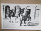 PAKISTAN  CAMELS  CARTE PHOTO - Pakistan