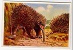 Wunder Der Tierwelt - Säugetiere (1933) - 199 - Schwarzstachel-Langschnabeligel, Echidnas, échidnés - Cigarette Cards