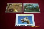 LOT  3 CARTES POSTALES  THEME   CHEVAUX - Pferde