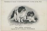 Japanese Dog Breed Chin Imported By Madame La Baronne D' Ulm Erbach - Japan