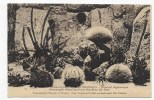 MUSEE OCEANOGRAPHIQUE DE MONACO - N° 105 - NOUVEL AQUARIUM - OURSINS DE MER - CPA NON VOYAGEE - Oceanographic Museum