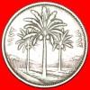 ★PALMS: IRAQ ★ 50 FILS 1392-1972! LOW START★ NO RESERVE! - Iraq